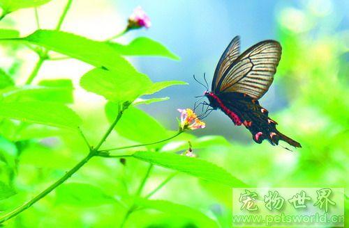蝴蝶的细小结构图片