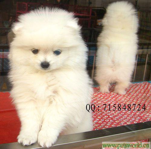 超级可爱的狗狗宝贝出售啦!